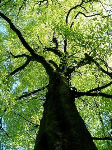 For International Year of Biodiversity, World Citizens Propose Planting Trees of Life