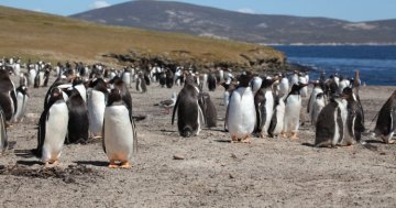 The most remote places of the EU : Falkland Islands