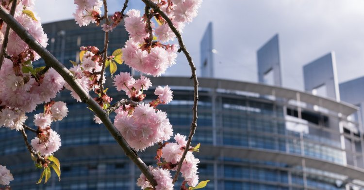 European Parliament votes for making 9 May an EU-wide public holiday